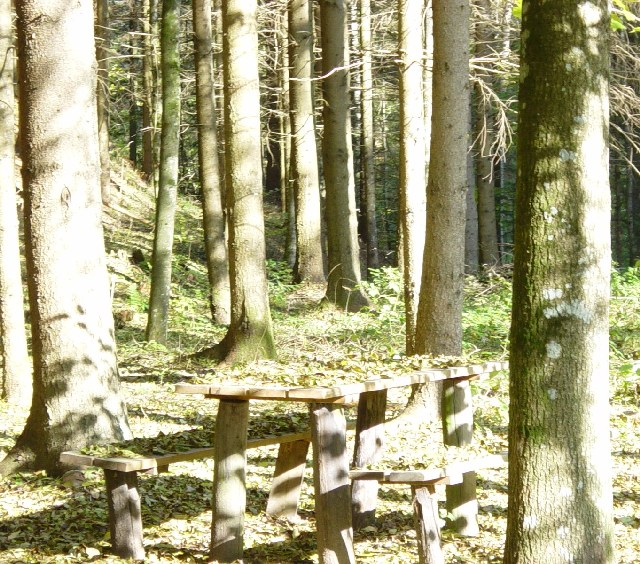 image015_Wald Unschuld
